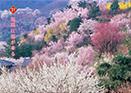 福島に福が来る 春夏版 2006年作成